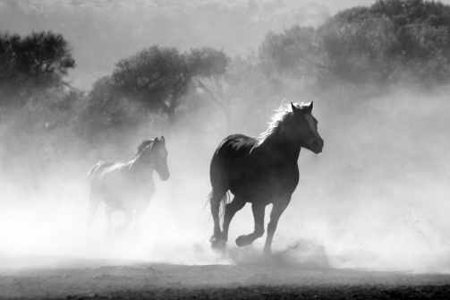 horse-herd-fog-nature-52500.jpeg